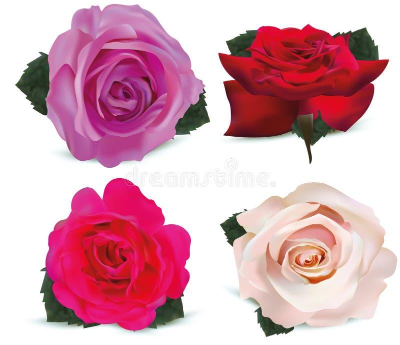 Καθορισμένα τριαντάφυλλα που απομονώνονται στο άσπρο υπόβαθρο Ροζ τριαντάφυλλων, πορφύρα, κόκκινο, μπεζ τρισδιάστατα ρεαλιστικά λ διανυσματική απεικόνιση