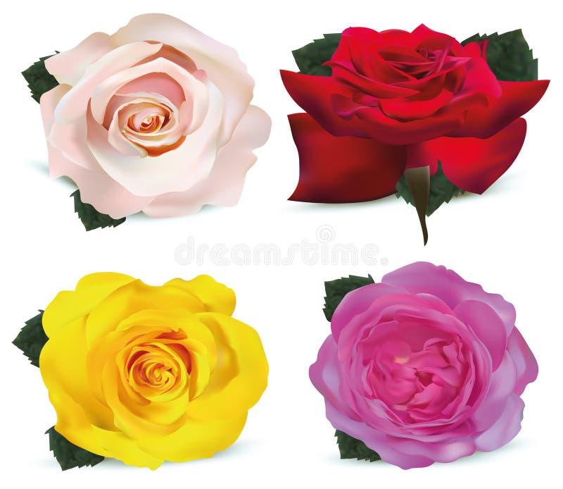 Καθορισμένα τριαντάφυλλα που απομονώνονται στο άσπρο υπόβαθρο Τριαντάφυλλα κίτρινα, κοράλλι, κόκκινο, μπεζ τρισδιάστατα ρεαλιστικ απεικόνιση αποθεμάτων