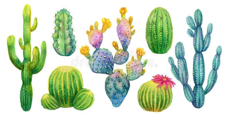 Καθορισμένη απομονωμένη watercolor απεικόνιση κάκτων απεικόνιση αποθεμάτων