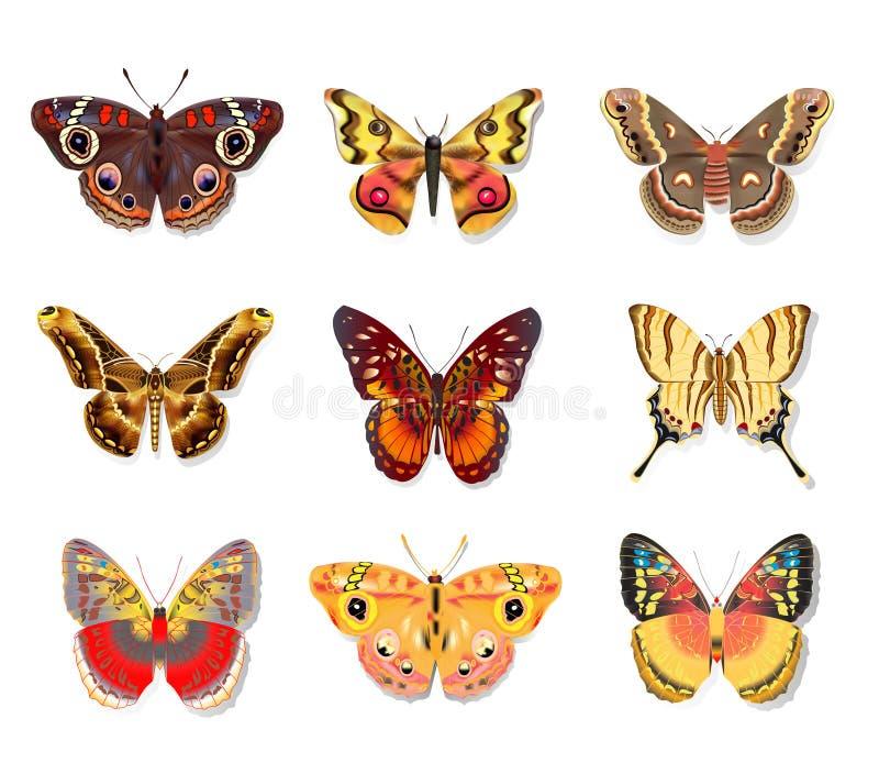 Καθορισμένη όμορφη πεταλούδα στο άσπρο υπόβαθρο ελεύθερη απεικόνιση δικαιώματος