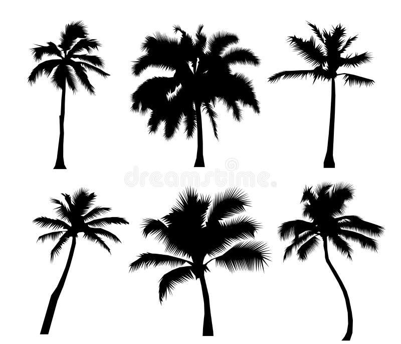 Καθορισμένοι τροπικοί φοίνικες με τα φύλλα, τα ώριμα και νέα φυτά, μαύρες σκιαγραφίες που απομονώνονται στο άσπρο υπόβαθρο διάνυσ ελεύθερη απεικόνιση δικαιώματος
