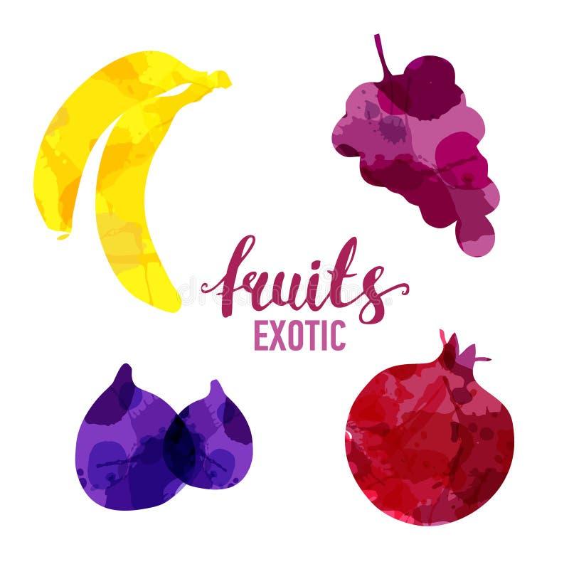 Καθορισμένοι φρούτα συρμένοι λεκέδες watercolor και λεκέδες με μια μπανάνα ψεκασμού, σταφύλια, σύκο, ρόδι Απομονωμένα διανυσματικ διανυσματική απεικόνιση