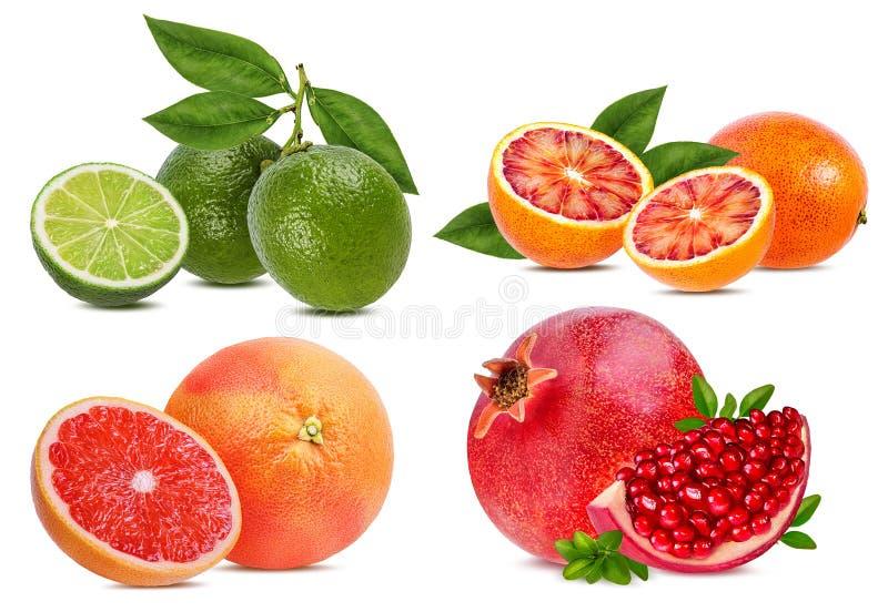 Καθορισμένο πορτοκάλι εσπεριδοειδούς, γκρέιπφρουτ, ασβέστης, ρόδι που απομονώνεται στοκ εικόνα