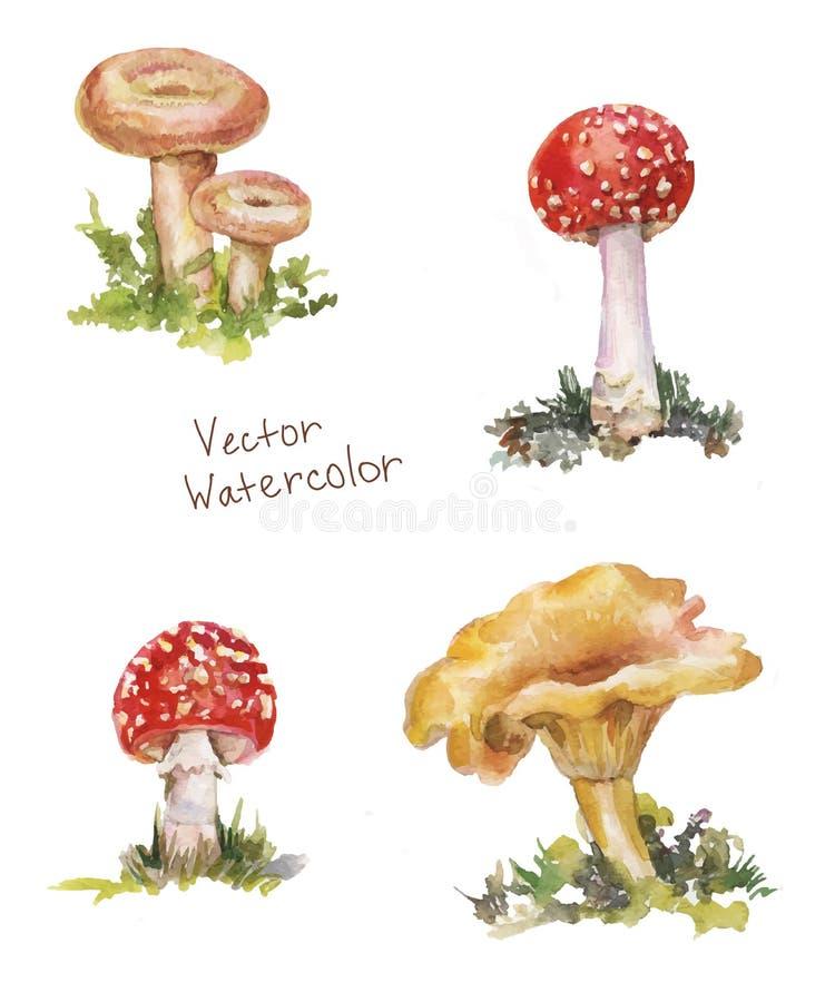 Καθορισμένο watercolor μανιταριών: amanita, chanterelle, volnushki διανυσματική απεικόνιση