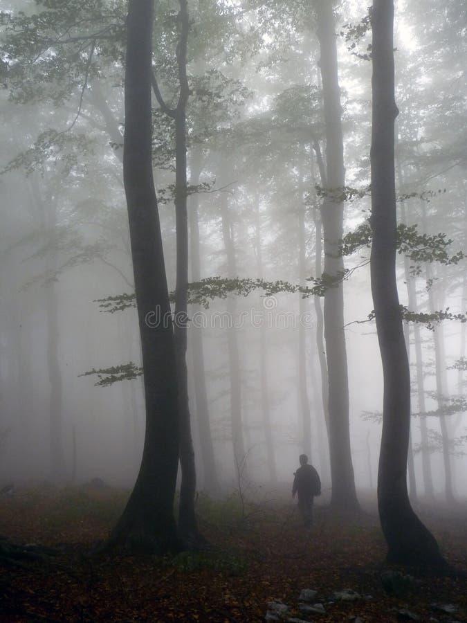 Και μαγικός στα ξύλα στοκ φωτογραφία με δικαίωμα ελεύθερης χρήσης