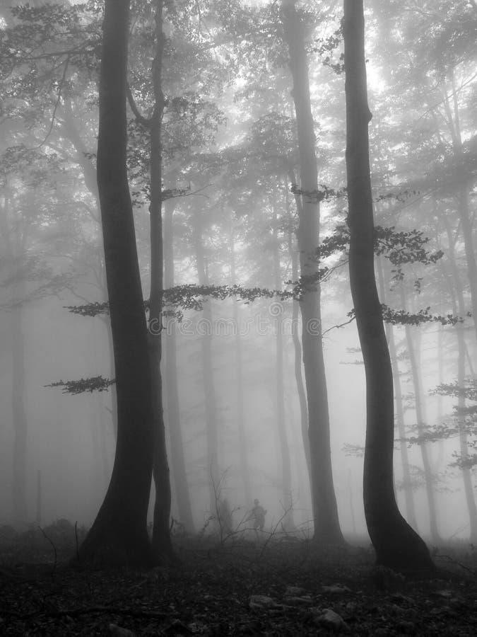 Και μαγικός στα ξύλα στοκ φωτογραφίες