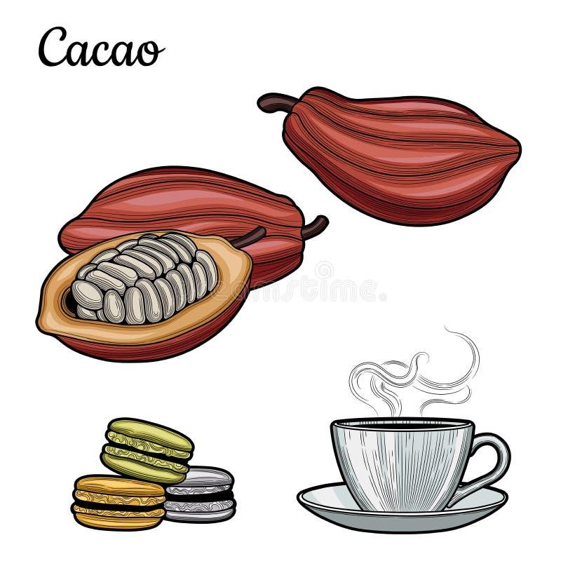 κακάο Ένα φλυτζάνι του ζεστού ποτού κακάο-γάλακτος διανυσματικό λευκό απεικόνισης κακάου φασολιών ανασκόπησης Macaroon Σοκολάτα διανυσματική απεικόνιση