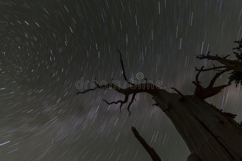 Κακά ίχνη αστεριών δέντρων στοκ φωτογραφίες με δικαίωμα ελεύθερης χρήσης