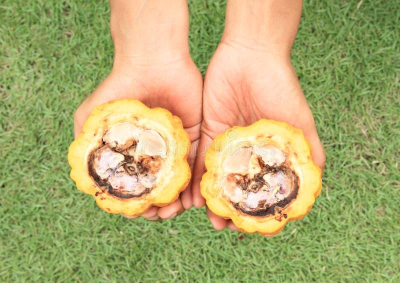 Κακά φρούτα σοκολάτας στοκ εικόνες με δικαίωμα ελεύθερης χρήσης