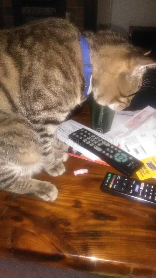 Κακή γάτα στοκ φωτογραφίες με δικαίωμα ελεύθερης χρήσης