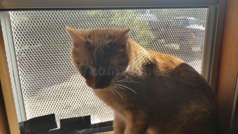Κακή γάτα του Tommy στοκ φωτογραφίες