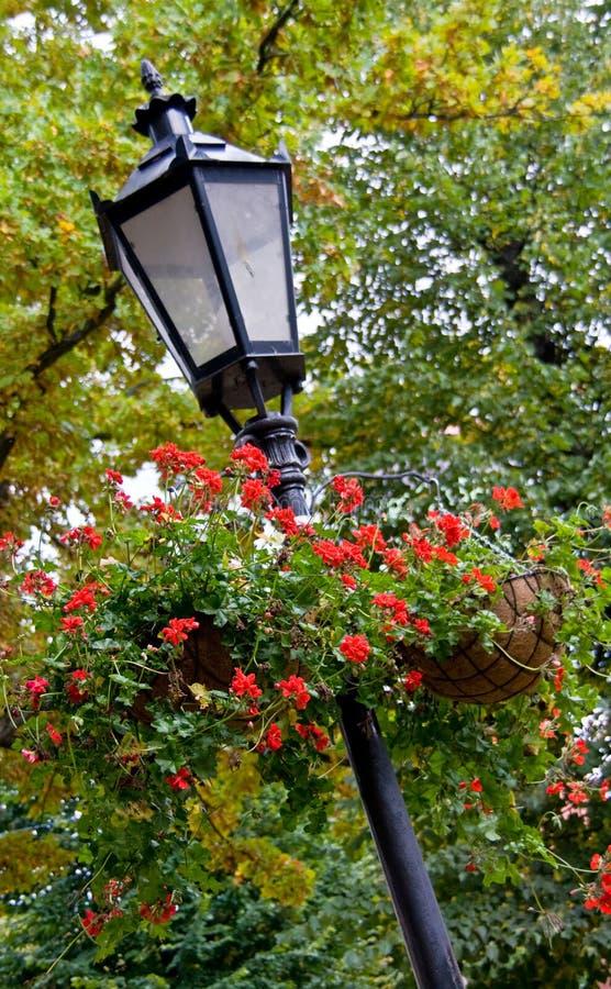 καλάθια που κρεμούν lamppost στοκ φωτογραφία