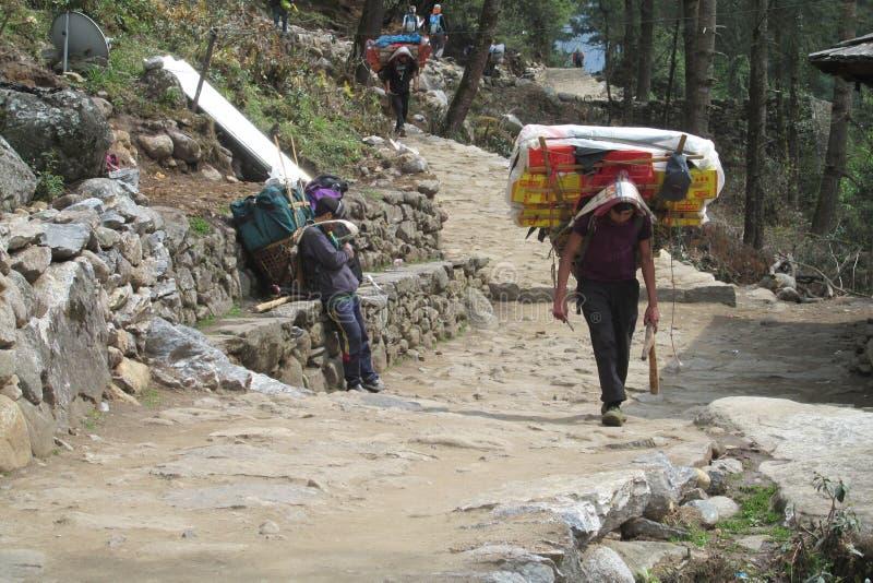 Καλάθι αχθοφόρων Sherpa στην πορεία οδοιπορίας του Νεπάλ στοκ φωτογραφία
