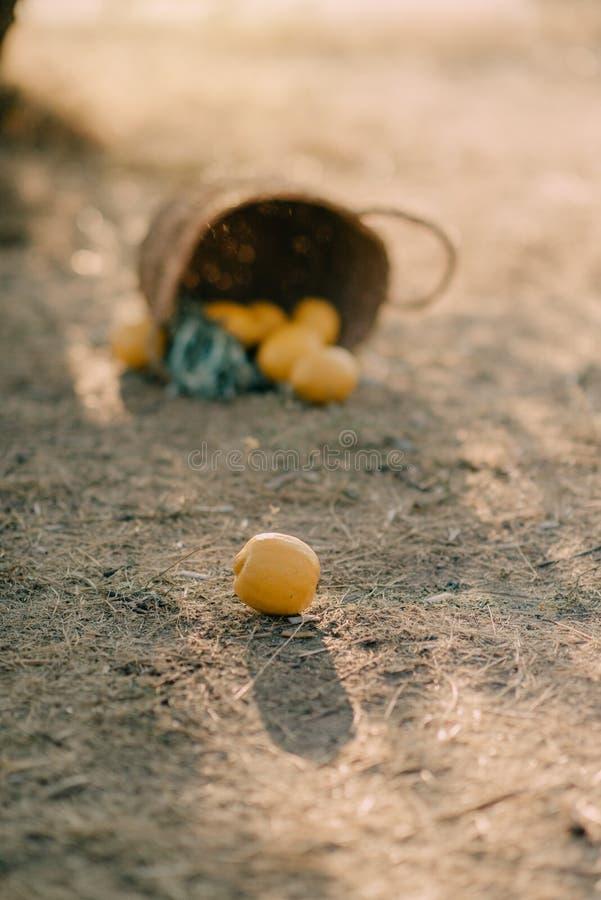 Καλάθι με τα λεμόνια στοκ φωτογραφίες