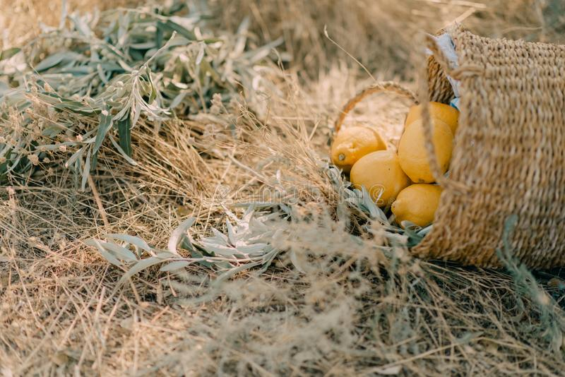 Καλάθι με τα λεμόνια στοκ φωτογραφία με δικαίωμα ελεύθερης χρήσης