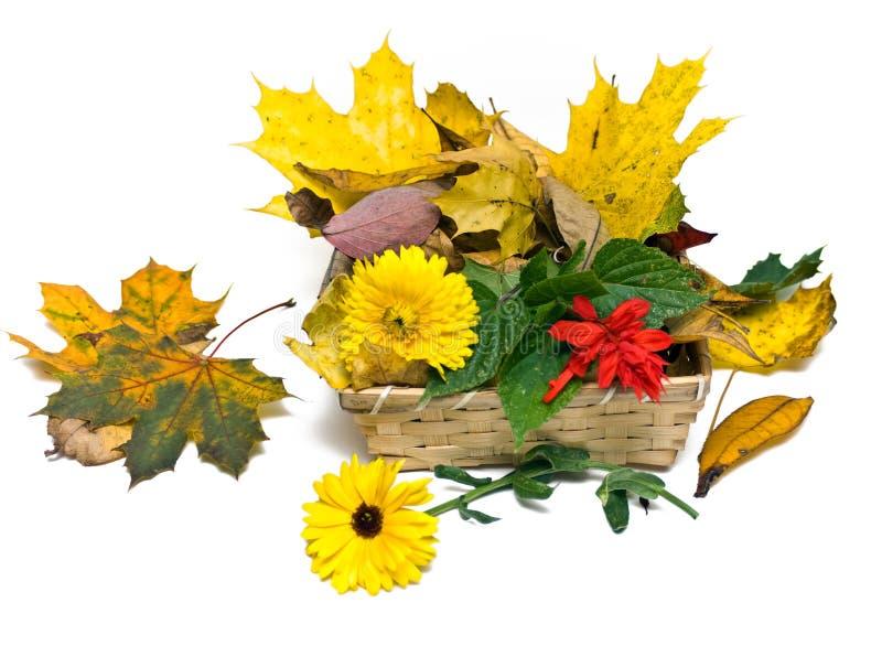 καλάθι φθινοπώρου στοκ εικόνα με δικαίωμα ελεύθερης χρήσης