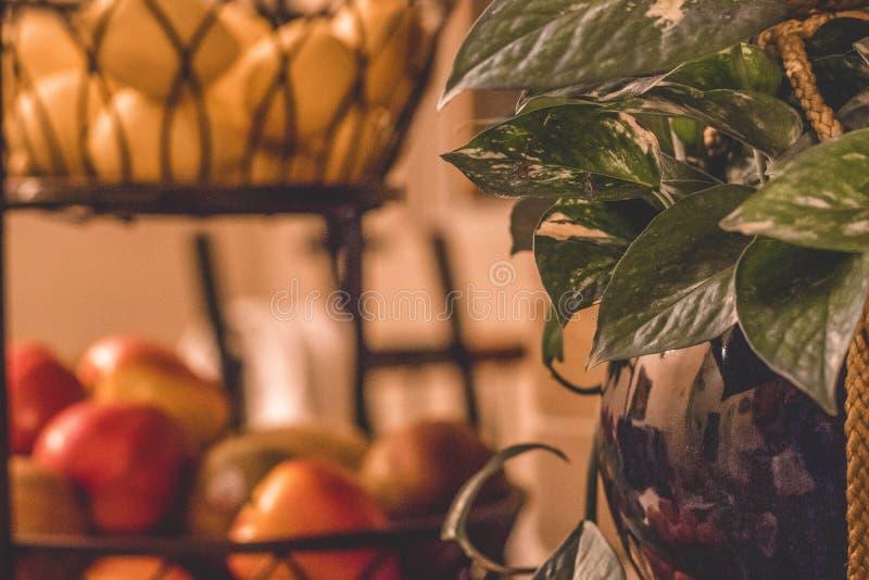 Καλάθι φρούτων πίσω από τις εσωτερικές εγκαταστάσεις στην κουζίνα στοκ φωτογραφία