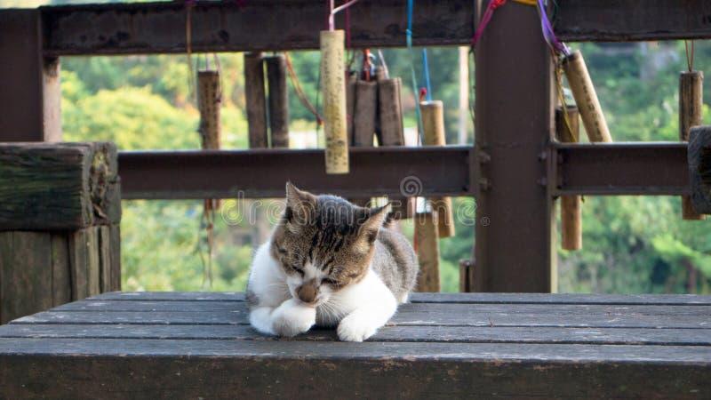 Καλή γάτα στον πάγκο στοκ εικόνα
