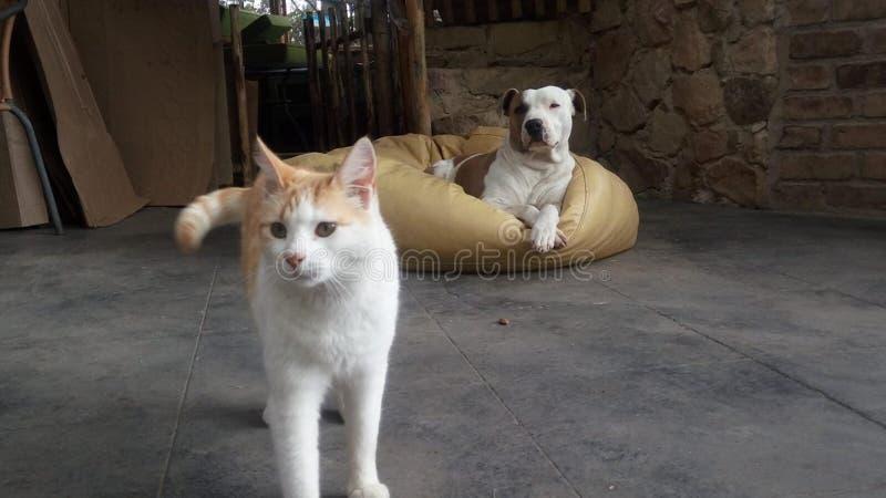 Καλή τοποθέτηση φίλων γατών & σκυλιών στοκ εικόνες με δικαίωμα ελεύθερης χρήσης