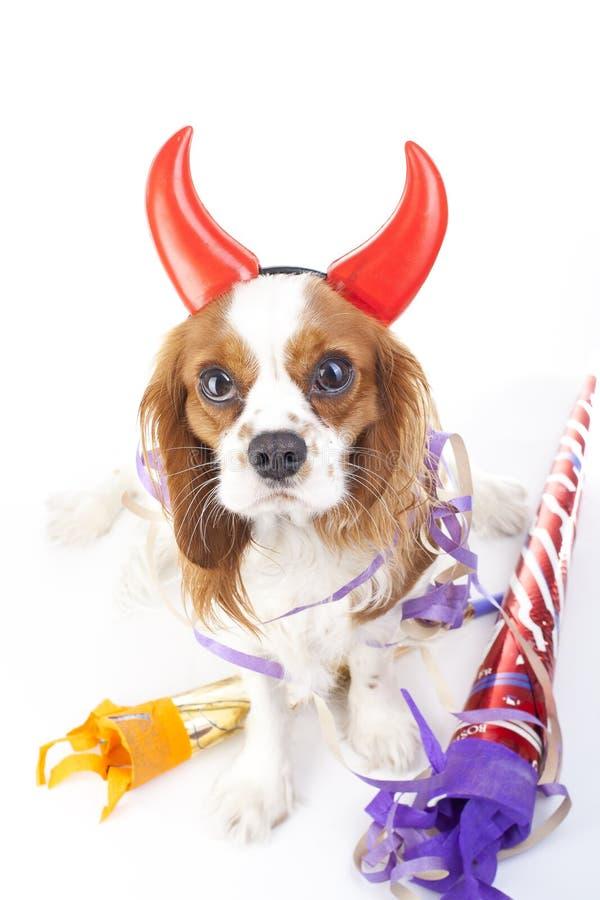 καλή χρονιά Γιορτάστε με την αλαζονίδα φωτογραφία σκυλιών σπανιέλ Charles βασιλιάδων Όμορφο χαριτωμένο αλαζόνας σκυλί κουταβιών κ στοκ φωτογραφία