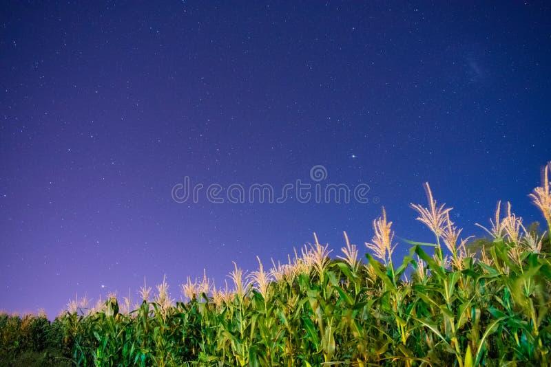 Καλαμπόκι & αστέρια μέσα σε μια νύχτα με τον κόσμο στοκ φωτογραφίες