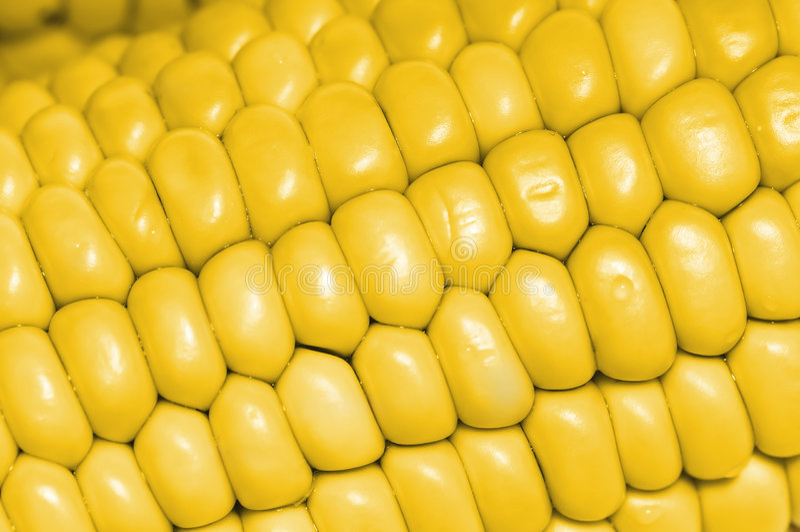 καλαμπόκι σπαδίκων κίτρινο στοκ εικόνα με δικαίωμα ελεύθερης χρήσης
