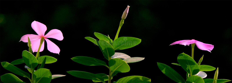 καλημέρα λουλουδιών στοκ εικόνες με δικαίωμα ελεύθερης χρήσης