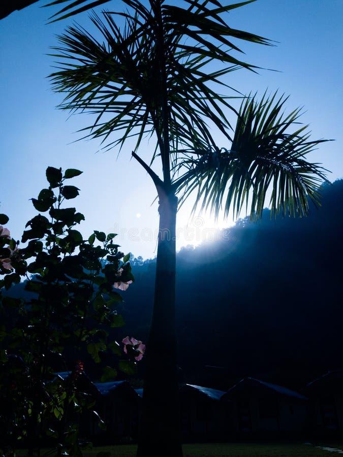 Καλημέρα σε έναν όμορφο κήπο στοκ φωτογραφία με δικαίωμα ελεύθερης χρήσης
