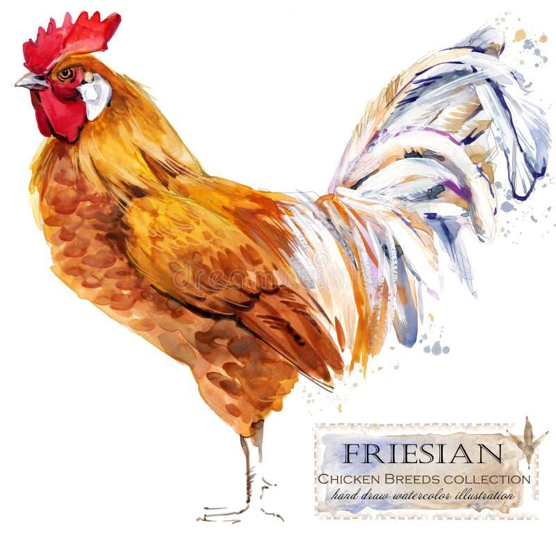 Καλλιέργεια πουλερικών Σειρά φυλών κοτόπουλου εσωτερική απεικόνιση watercolor αγροτικών πουλιών απεικόνιση αποθεμάτων