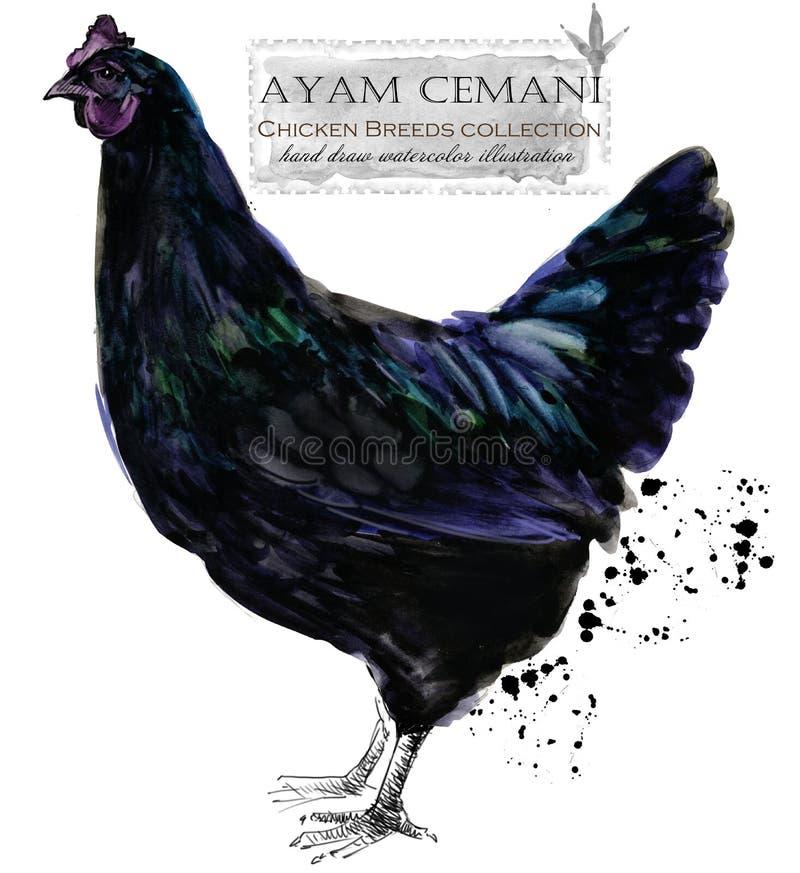 Καλλιέργεια πουλερικών Σειρά φυλών κοτόπουλου εσωτερικό αγροτικό πουλί στοκ εικόνα με δικαίωμα ελεύθερης χρήσης