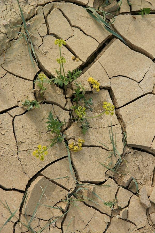 καλλιεργήσιμη απώλεια &epsil στοκ εικόνα
