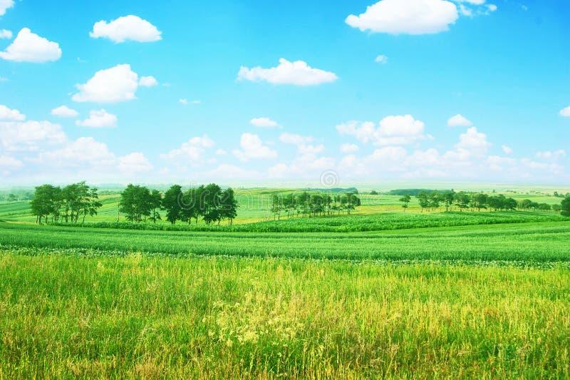 καλλιεργήσιμο έδαφος α στοκ εικόνες