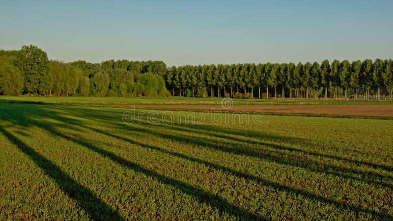 Καλλιεργήσιμο έδαφος στη φλαμανδική επαρχία το φως, με τα δέντρα με τις μακριές σκιές στοκ εικόνες με δικαίωμα ελεύθερης χρήσης