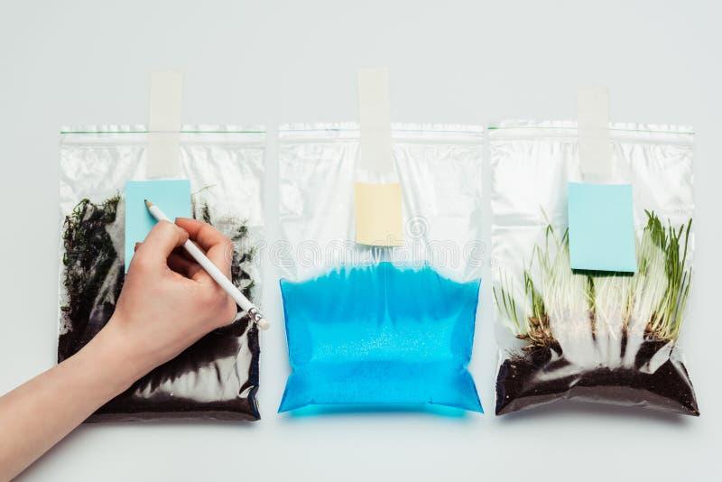 καλλιεργημένη εικόνα της γυναίκας που υπογράφει τις πλαστικές τσάντες με το χώμα, το νερό και το σπορόφυτο διανυσματική απεικόνιση