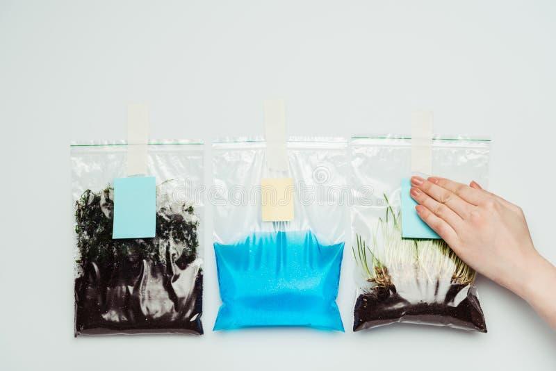 καλλιεργημένη εικόνα των κολλώντας φύλλων εγγράφου γυναικών στις πλαστικές τσάντες με το χώμα, το νερό και το σπορόφυτο διανυσματική απεικόνιση