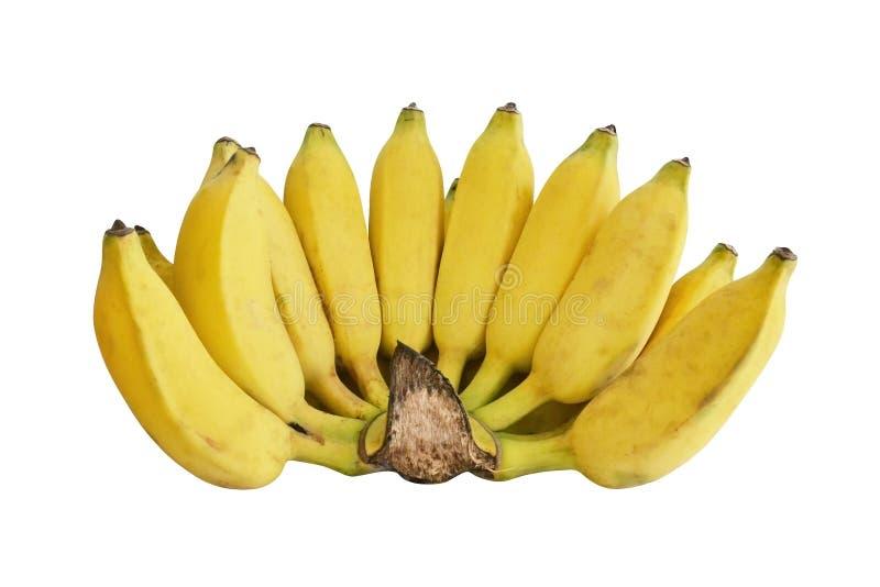 καλλιεργημένη μπανάνα στοκ φωτογραφίες