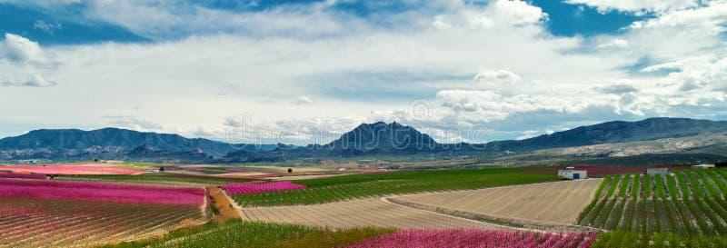 Καλλιεργημένοι οπωρώνες άποψης εικόνας οριζόντιοι στην άνθιση Ισπανία στοκ φωτογραφίες με δικαίωμα ελεύθερης χρήσης