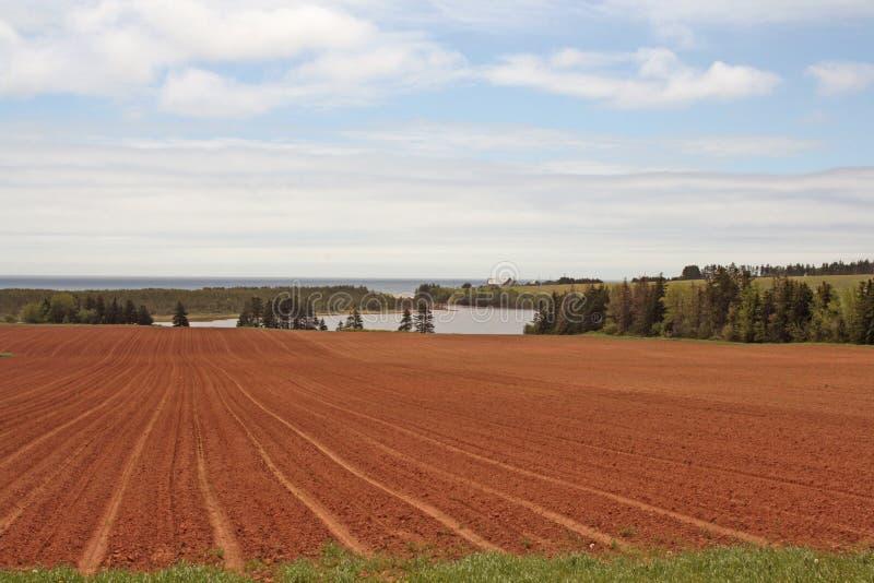 καλλιεργημένος ο Κανα&delta στοκ φωτογραφία με δικαίωμα ελεύθερης χρήσης