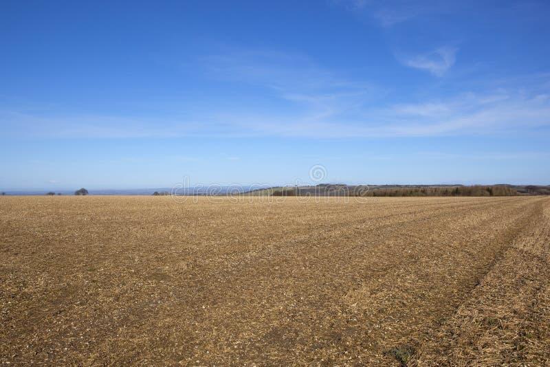 Καλλιεργημένος τομέας κορυφών υψώματος με τη δασώδη περιοχή στοκ εικόνα