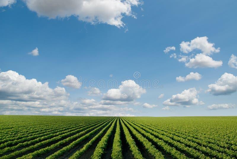 καλλιεργημένο πεδίο στοκ εικόνα με δικαίωμα ελεύθερης χρήσης