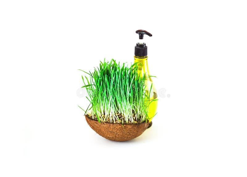 Καλλυντικό προϊόν από τα οργανικά προϊόντα στο υπόβαθρο των πράσινων βλαστών στοκ φωτογραφία με δικαίωμα ελεύθερης χρήσης