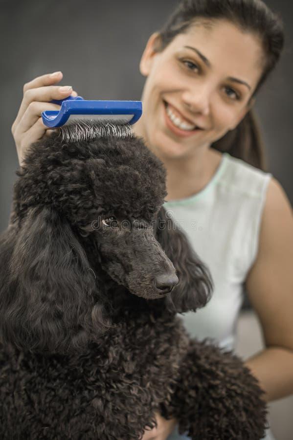 Καλλωπισμός ενός μικρού σκυλιού σε ένα κομμωτήριο για τα σκυλιά στοκ φωτογραφία