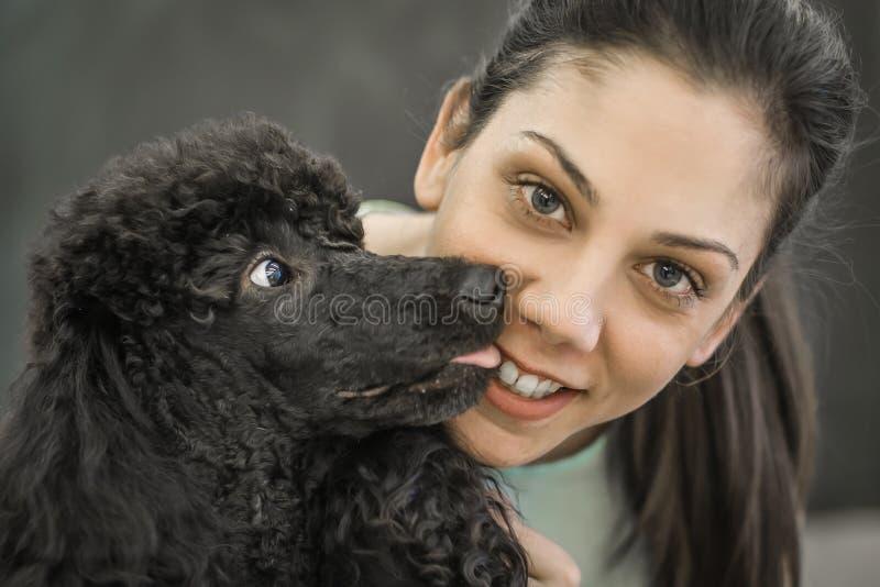 Καλλωπισμός ενός μικρού σκυλιού σε ένα κομμωτήριο για τα σκυλιά στοκ φωτογραφίες με δικαίωμα ελεύθερης χρήσης