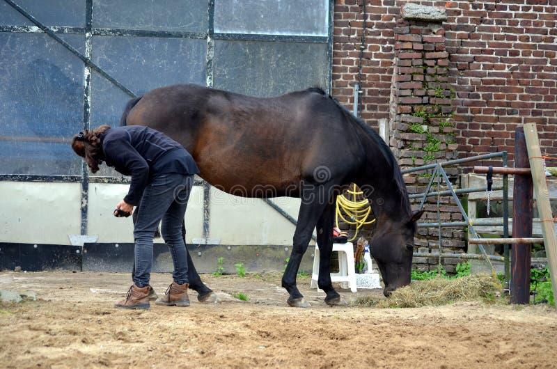 Καλλωπισμός του αλόγου της στοκ φωτογραφία
