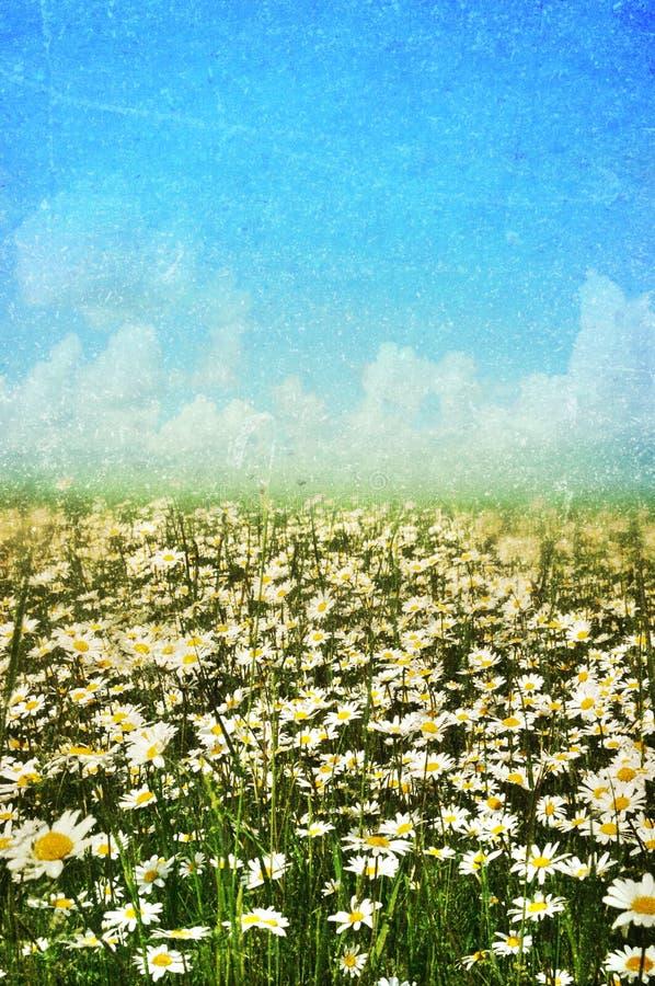 καλοκαίρι άνοιξης ανασκόπησης στοκ εικόνα