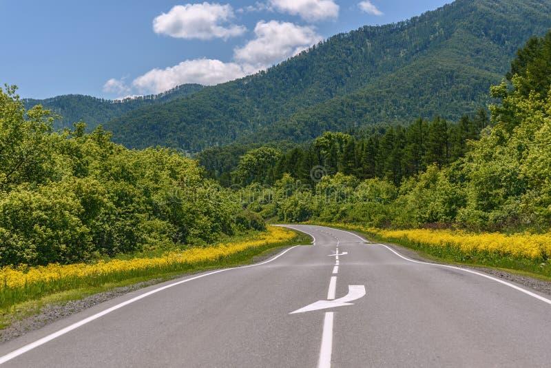 Καλοκαίρι ασφάλτου λουλουδιών οδικών βουνών στοκ εικόνες