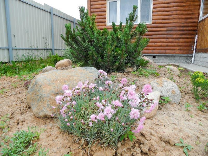 καλοκαίρι κήπων λουλουδιών ανθών στοκ φωτογραφίες