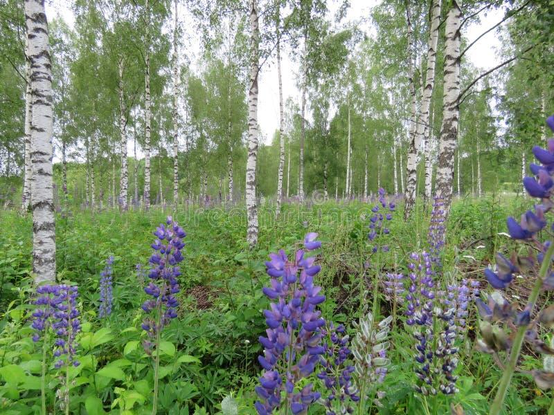 καλοκαίρι Σουηδία στοκ εικόνα