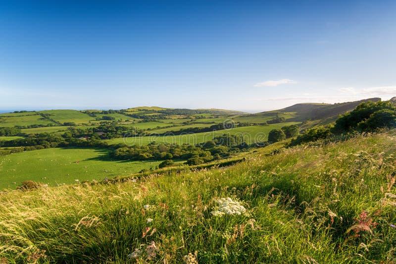 Καλοκαίρι στην επαρχία του Dorset στοκ φωτογραφίες