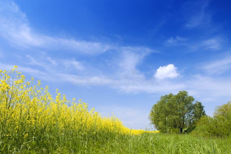 καλοκαίρι φύσης τοπίων γ&epsilo στοκ φωτογραφία με δικαίωμα ελεύθερης χρήσης